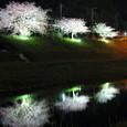 南伊豆の桜まつり
