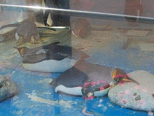 ペンギンお疲れ・・?